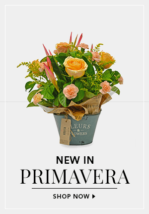 Our Newest Arrangement Primavera - On Sale Now