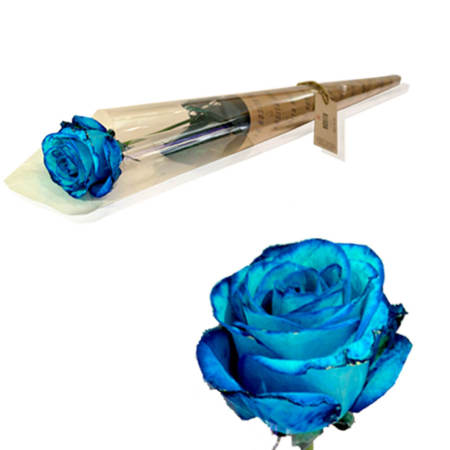 Single Blue Rosita`s Rose