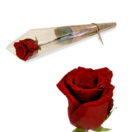 Single Red Colombian rose